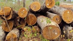 מחסן עצים במרכז הארץ