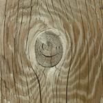 עץ המלוק