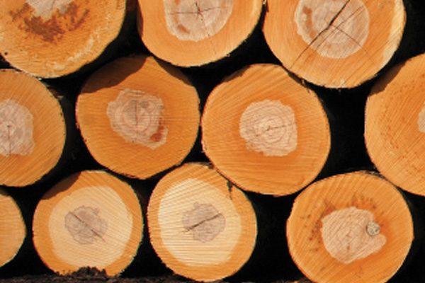 מנסרת עצים